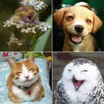 fleurs de bach et émotionnel animal