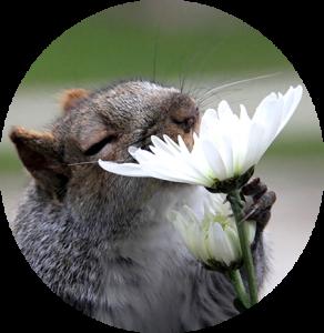 animal et fleurs de Bach